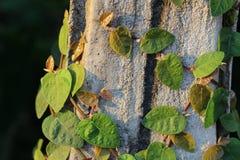 El verde deja el bokeh Foto de archivo