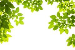 El verde deja el fondo Fotografía de archivo libre de regalías