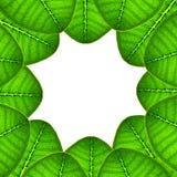 El verde deja el fondo Foto de archivo libre de regalías
