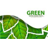 El verde deja el fondo Imagenes de archivo