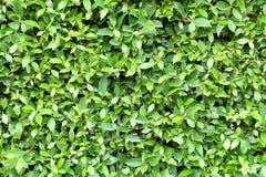 El verde deja el fondo Fotografía de archivo