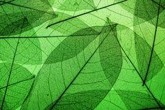 El verde deja el fondo Fotos de archivo