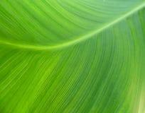El verde deja el fondo Imagen de archivo libre de regalías