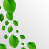 El verde deja el fondo abstracto Imágenes de archivo libres de regalías