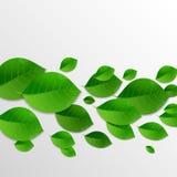 El verde deja el fondo abstracto Foto de archivo libre de regalías