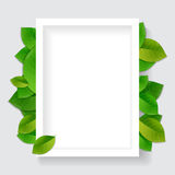 El verde deja el fondo abstracto Fotografía de archivo libre de regalías