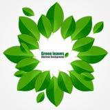 El verde deja el fondo abstracto Imagen de archivo libre de regalías