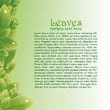 El verde deja el fondo abstracto para los folletos Fotografía de archivo