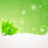 El verde deja el fondo de la ecología Imagenes de archivo