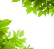 El verde deja el fondo de la naturaleza de la frontera Fotografía de archivo libre de regalías