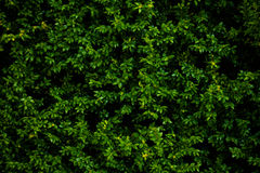 El verde deja el fondo de la naturaleza de la visión superior Fotos de archivo