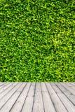 El verde deja el fondo de la pared Imagen de archivo libre de regalías