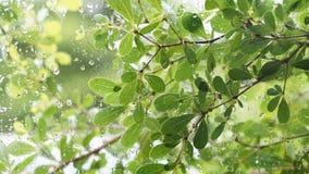 El verde deja el fondo, gotitas de agua en la ventana de cristal Fotografía de archivo