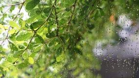 El verde deja el fondo, gotitas de agua en la ventana de cristal Fotos de archivo libres de regalías