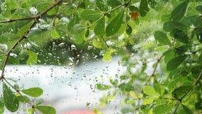 El verde deja el fondo, gotitas de agua en la ventana de cristal Foto de archivo libre de regalías