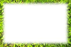 El verde deja el marco Fotos de archivo libres de regalías