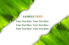 El verde deja el marco Imagenes de archivo