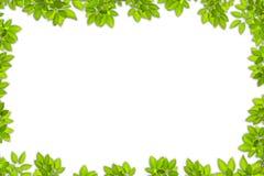 El verde deja el marco imagen de archivo libre de regalías