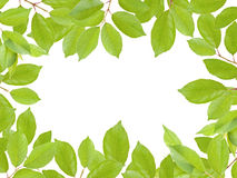 El verde deja el marco Foto de archivo