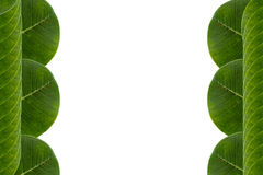 El verde deja el marco Foto de archivo libre de regalías