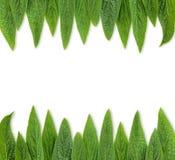 El verde deja el marco Fotografía de archivo libre de regalías