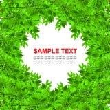 El verde deja el marco aislado Foto de archivo libre de regalías