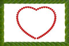 El verde deja el marco en forma de corazón Foto de archivo libre de regalías
