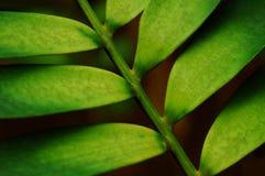 El verde deja el modelo Foto de archivo