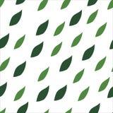 El verde deja el modelo inconsútil en un fondo blanco Fotos de archivo libres de regalías