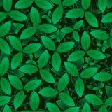 El verde deja el modelo inconsútil Imagen del vector EPS10 Fotografía de archivo libre de regalías