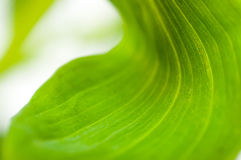 El verde deja el primer fotografía de archivo libre de regalías
