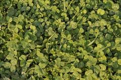 El verde deja el verdor Fotos de archivo