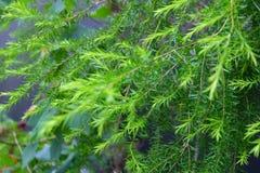 El verde deja floral inconsútil Fotos de archivo