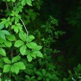 El verde deja follaje estacional Fotos de archivo