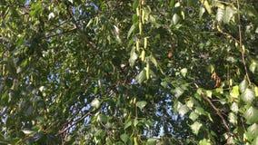 El verde deja el fondo con el sol que brilla a través de las hojas La luz del sol que emite entre el verde se va en un día solead metrajes