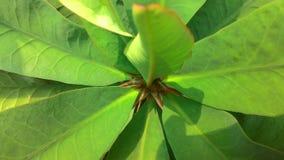 El verde deja el fondo 123 de la naturaleza del verano Imágenes de archivo libres de regalías
