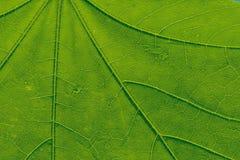 El verde deja el fondo Deje la textura imágenes de archivo libres de regalías