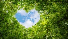 El verde deja el fondo, extracto del fondo del símbolo del amor del eco de la idea del concepto de la ecología de la nube de la f Fotografía de archivo libre de regalías