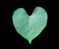El verde deja forma del corazón con el fondo negro Imagenes de archivo