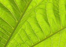 El verde deja I Foto de archivo libre de regalías