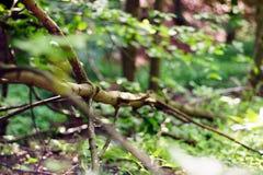 El verde deja la ejecución de un árbol en el bosque, fondo grande de la falta de definición La foto se puede utilizar como fondo Fotos de archivo libres de regalías