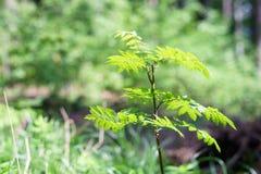 El verde deja la ejecución de un árbol en el bosque, fondo grande de la falta de definición La foto se puede utilizar como fondo Fotografía de archivo