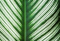 El verde deja la línea modelos de la naturaleza y bordes blancos que alternan la textura para el fondo, reflexión del sol imagen de archivo libre de regalías