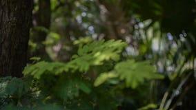 El verde deja la mudanza en el aire, cantidad del stcok del bosque almacen de metraje de vídeo