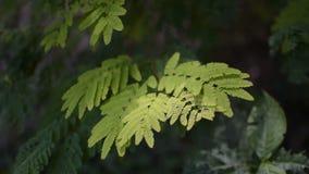 El verde deja la mudanza en el aire, cantidad del stcok del bosque almacen de video