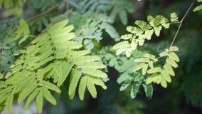 El verde deja la mudanza en el aire, cantidad del stcok del bosque metrajes