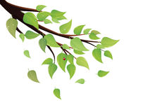 El verde deja la rama de árbol Fotos de archivo