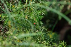 El verde deja la textura, fondo Plantas y verdor en jardín botánico Fotos de archivo