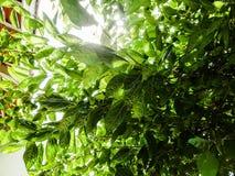 El verde deja las venas Imagen de archivo libre de regalías