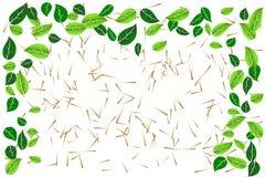 El verde deja el marco de la frontera sobre los palillos de madera minúsculos texturizados en el fondo transparente blanco Ejempl Fotografía de archivo libre de regalías